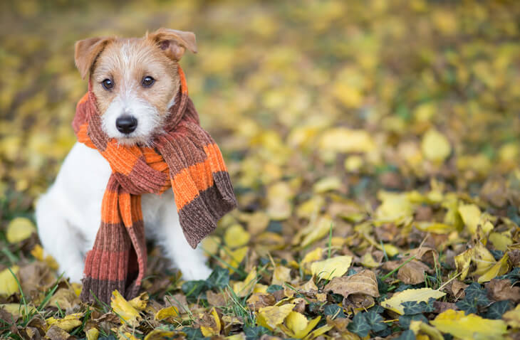 4 Reasons To Schedule Fall AC Tune-Ups